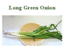 Long Green Onion